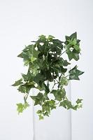 Medium Sage Ivy Hanging Bush x9 30cm