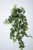Medium Sage Ivy Hanging Bush x15 90cm