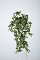 Medium Sage Ivy Hanging Bush x12 70cm