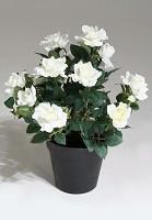 Rose w/pulp Pot 34cm