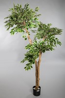 Vari Fact Ficus Tree w/1428lvs 180cm