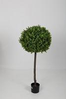Boxwood Topiary 120cm