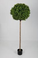 Boxwood Topiary 150cm