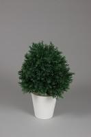Plastic Pine Topiary in Pot  60cm