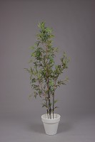Mini Black Bamboo Tree w/819 lvs 190cm