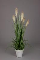 Reed Grass w/Plastic Pot 150cm