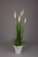Reed Grass w/Plastic Pot 180cm
