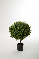Boxwood Ball x1152 w/Pot 60cm dia 40cm