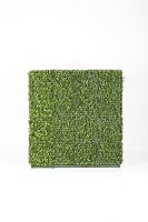 Boxwood Hedge Both Side 100x20x106cm
