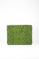 Boxwood Hedge Both Side 100x20x80cm