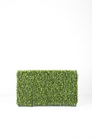 Boxwood Hedge (both side) 100x20x60
