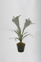 Staghorn Fern Pot 66 cm