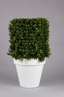 Plastic Boxwood Square Top w/868 Ls 46cm