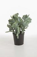 Cactus in pot 44cm