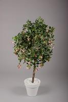 Fuchsia Ball Tree w/1273 lvs 190 flwrs