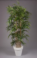 New Bamboo Tree w/1536lvs 210cm