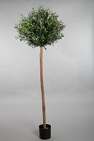 Olive Ball Tree w/2816 lvs 210cm