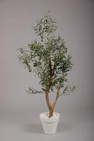 Olive Tree w/1496 lvs & 36 Fruits 150cm