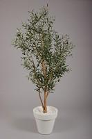 Olive Tree w/2006 lvs & 48 Fruits 180cm