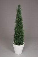Potted Cedar Tree 150cm