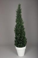 Potted Cedar Tree 180cm