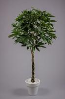 Pachira Braid Tree w/469lvs 150cm