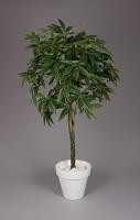 Pachira Braid Tree w/667lvs 180cm