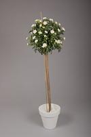 Rose Ball 150cm Cream/ White