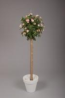 Rose Ball 150cm Soft Pink