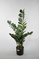 Zamioculcas Plant x8 w/154lvs 94cm