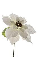 Poinsettia 35cm